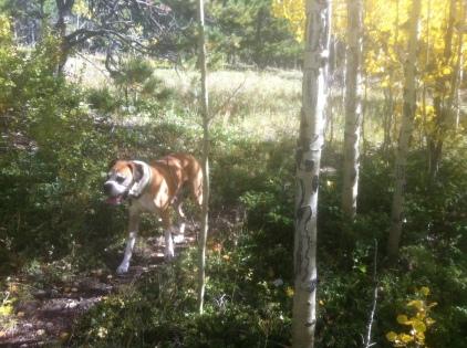 A rare geriatric dog sighting